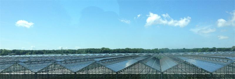 Glass-greenhouse-glass-supplier-morn